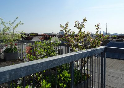 Balkon_Gaertner_Berlin_F18_059