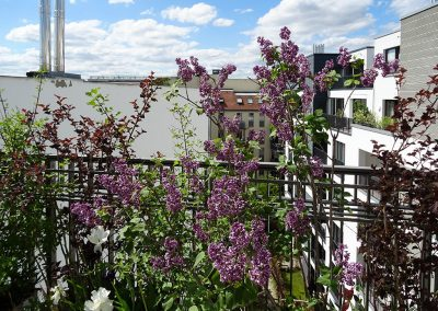 Balkon_Gaertner_Berlin_F18_093